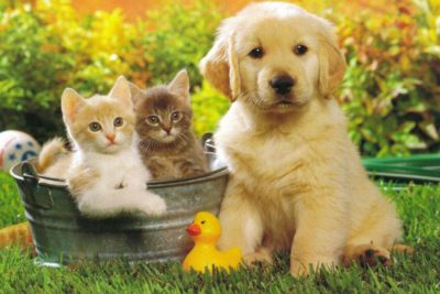 Amici Animali: prodotti naturali per cani, gatti e altri animali domestici